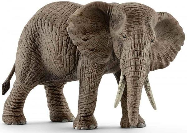 Afrikanische Elefantenkuh