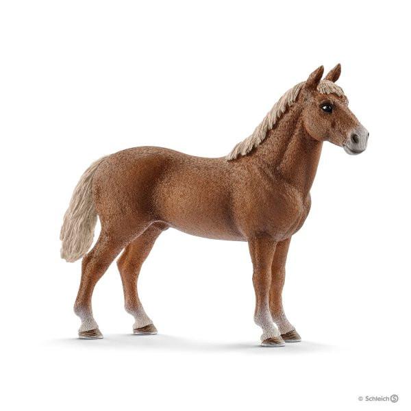 Morgan Horse Hengst